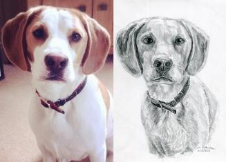 Eddie The Beagle sketch